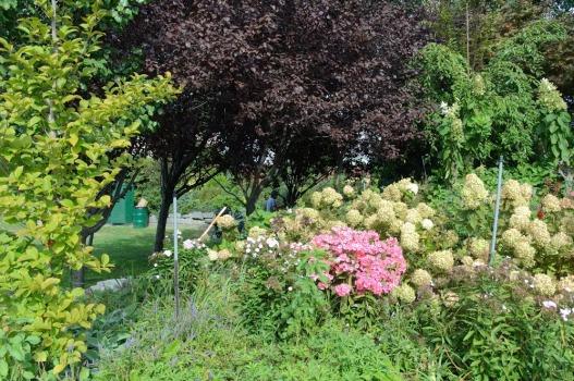 1.3 late summer greenery