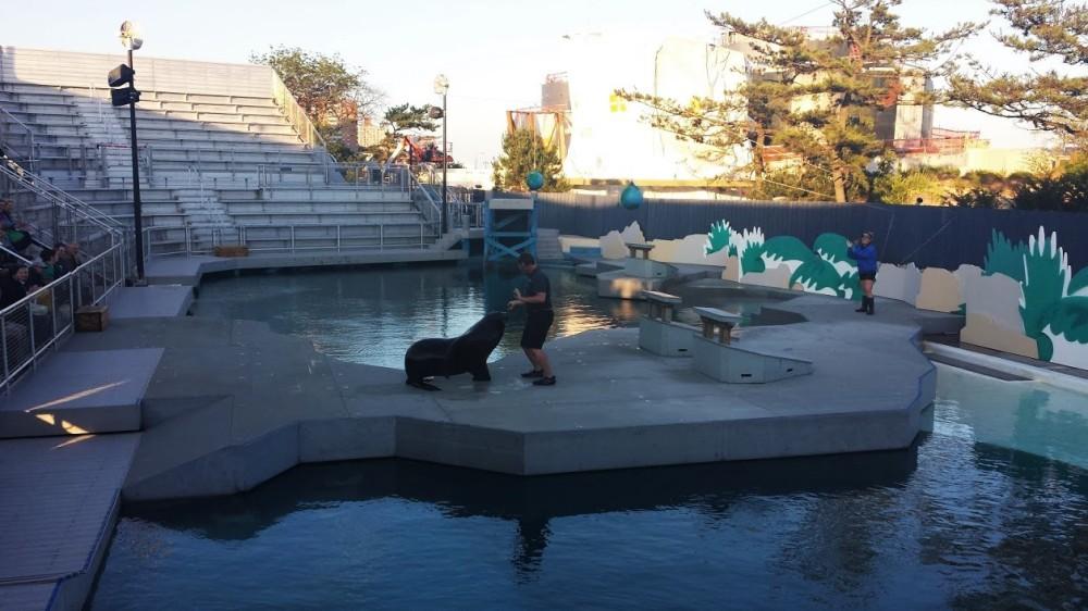 New York Aquarium, Seal Show