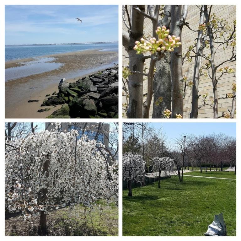 spring campus-COLLAGE