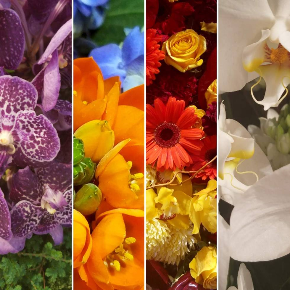 collage, flowers, colorful, bouquet, art, digital photography, photography, lensmomentsns