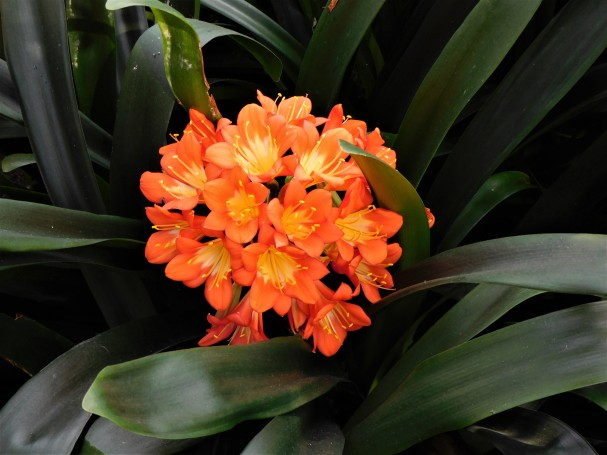 orange flowers, green background, art, photography, floral, lensmomentns
