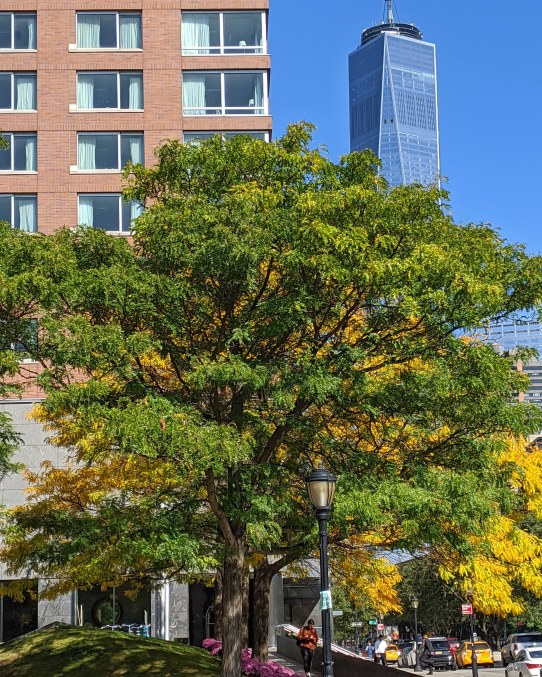a photo of a tree with green and yellow leaes with 1 world trade center building in the background, photo by LensMomentsNS - Nichole Spates 2019