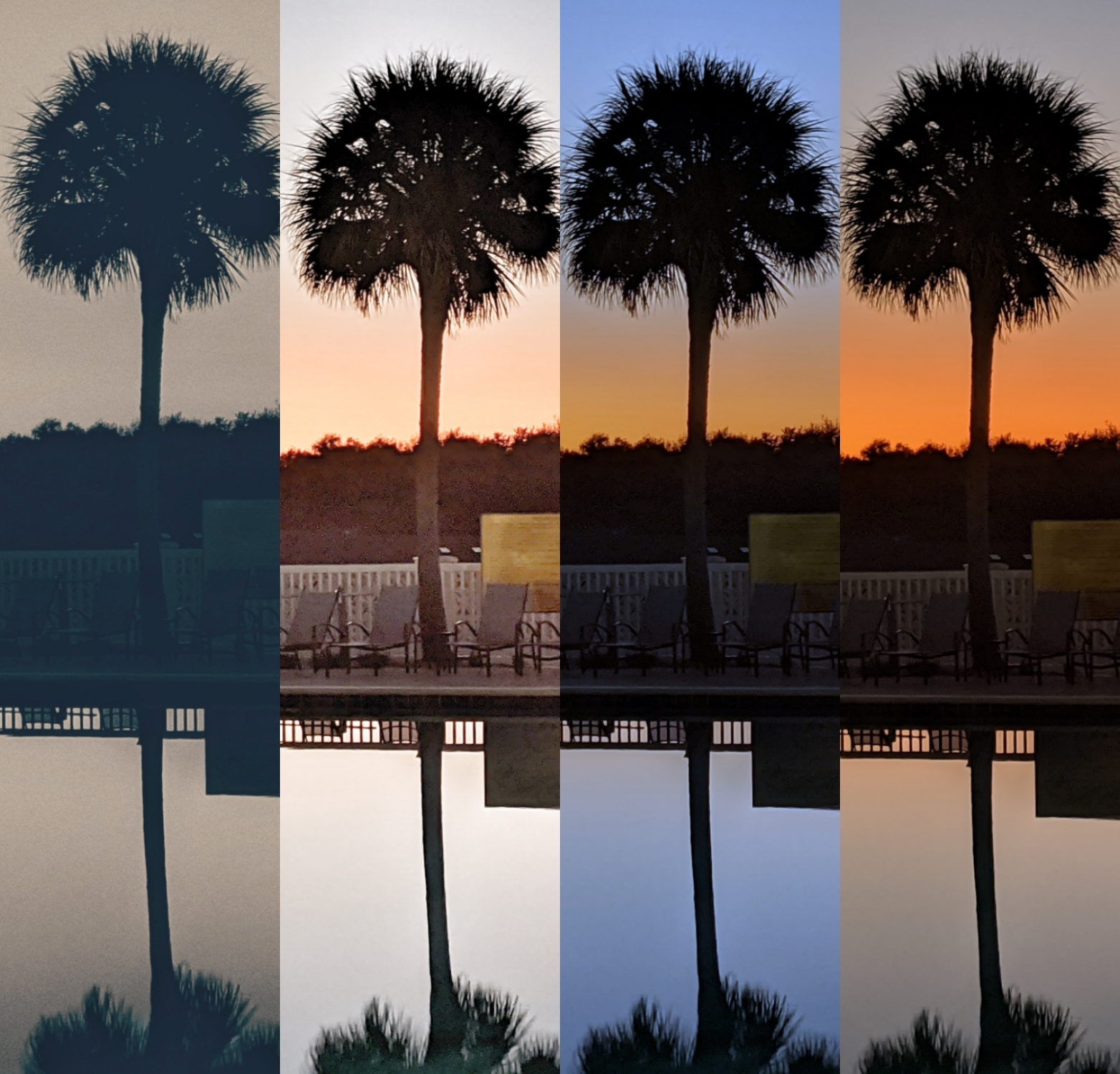 Collage version if palms Pool Sunset, a photo by LensMoments - Nichole Spates
