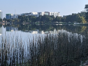 A photograph of Lake Ivanhoe, in Orlando, in morning light, by LensMoments - Nichole Spates 2020