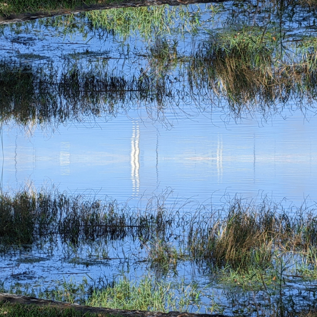 doubled image of reflections in a lake in orlando, florida, a photo by LensMoments - Nichole Spates 2021