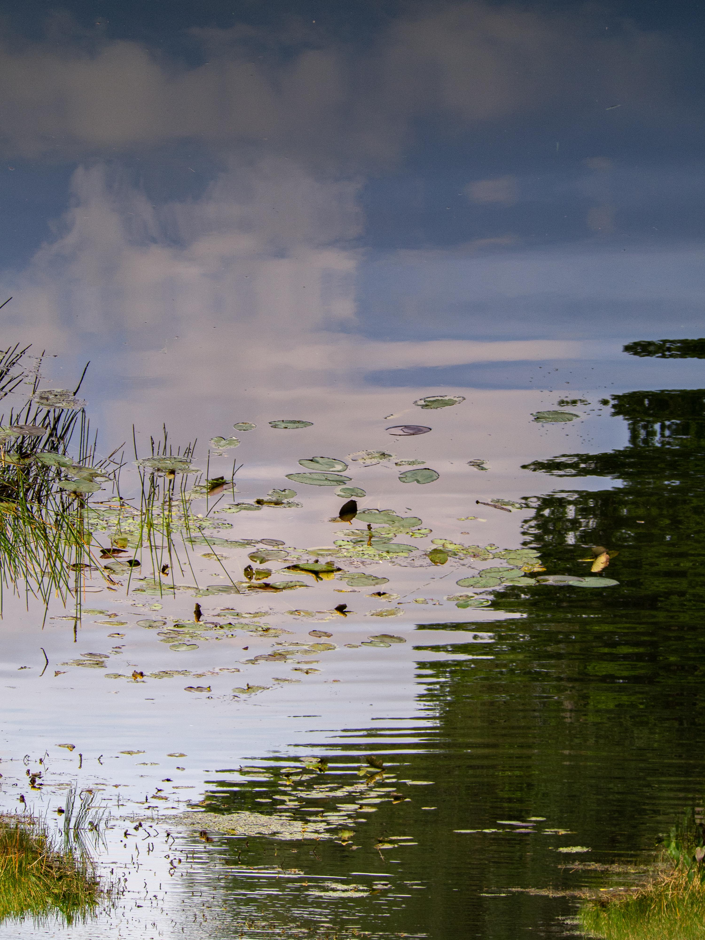 Impressionist Lake View