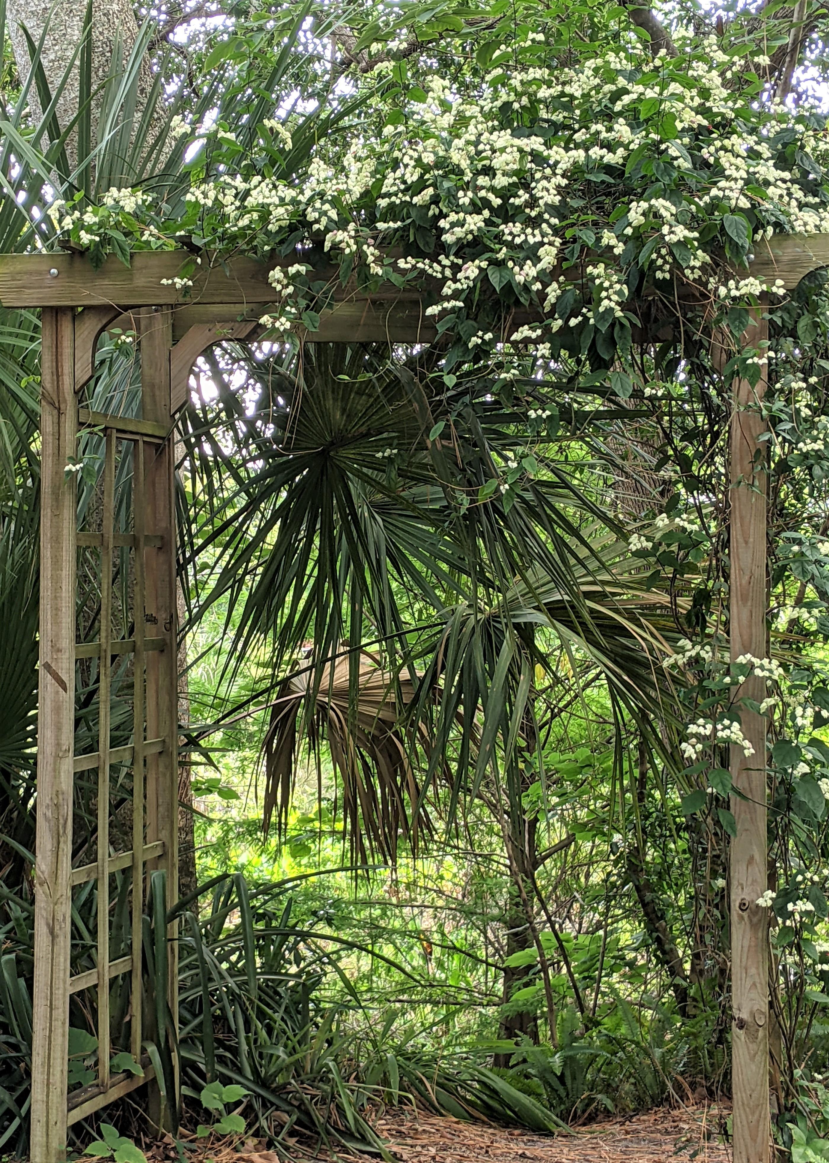 Mead Botanical Garden: Trellises