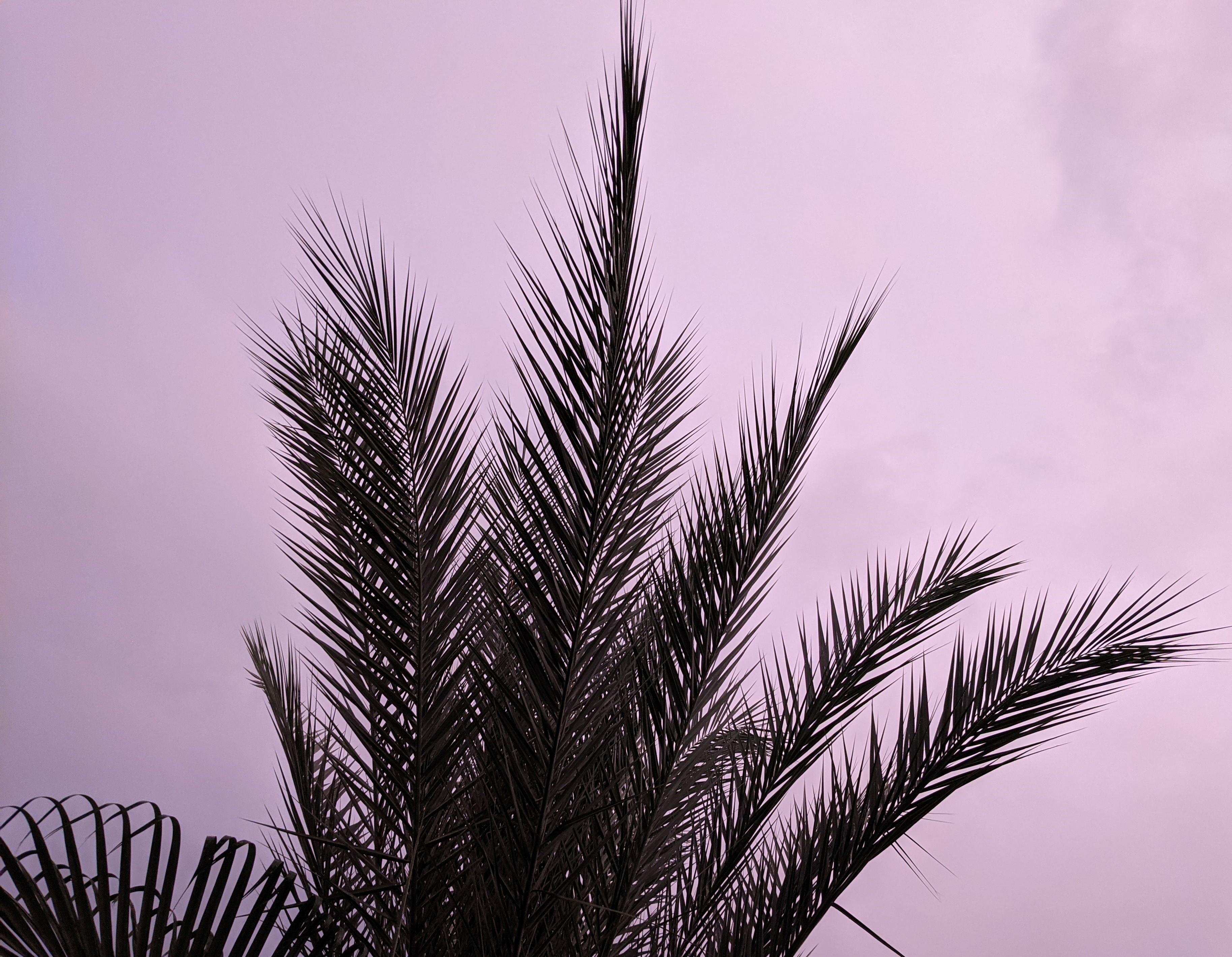 Silent Sunday: Stormy Sky